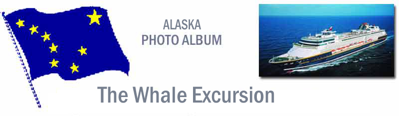 Whale page banner